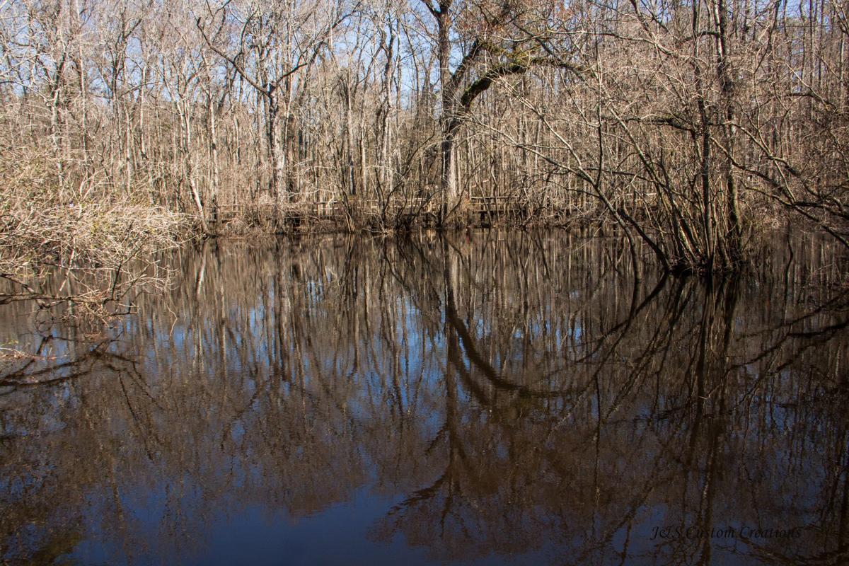 moores_creek--1108